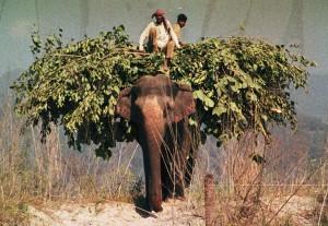 Elephant Corbett NP 20111989